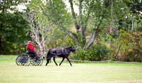 Saratoga Carriage Dressage